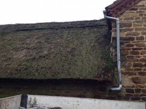 Moss Removal Service Nottingham