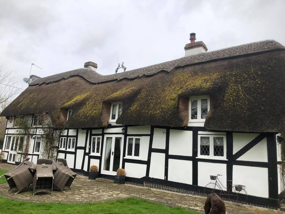 Moss and Lichen on Thatch